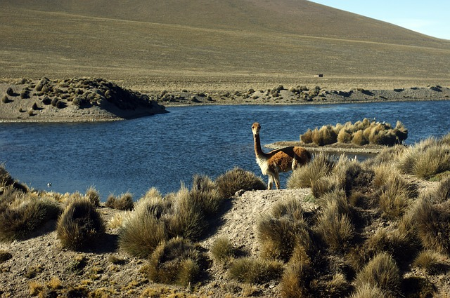 animales en Arequipa